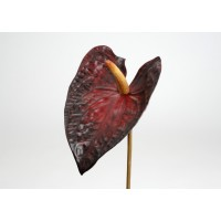 Flor Anthurium Royal a57cm burdeos