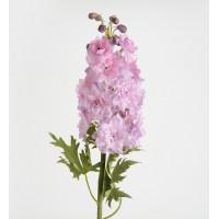 Flor Delphinium fenella rosa 71cm
