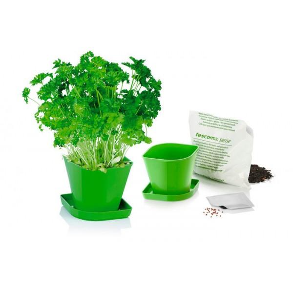 Juego kit para cultivar hierbas aromáticas Perejil Sense