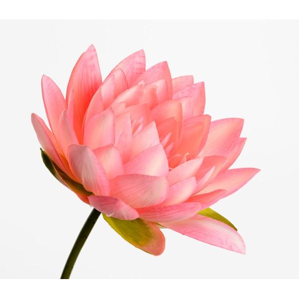 Flor de loto artificial rosa Lotus Nelumbo 74h cm